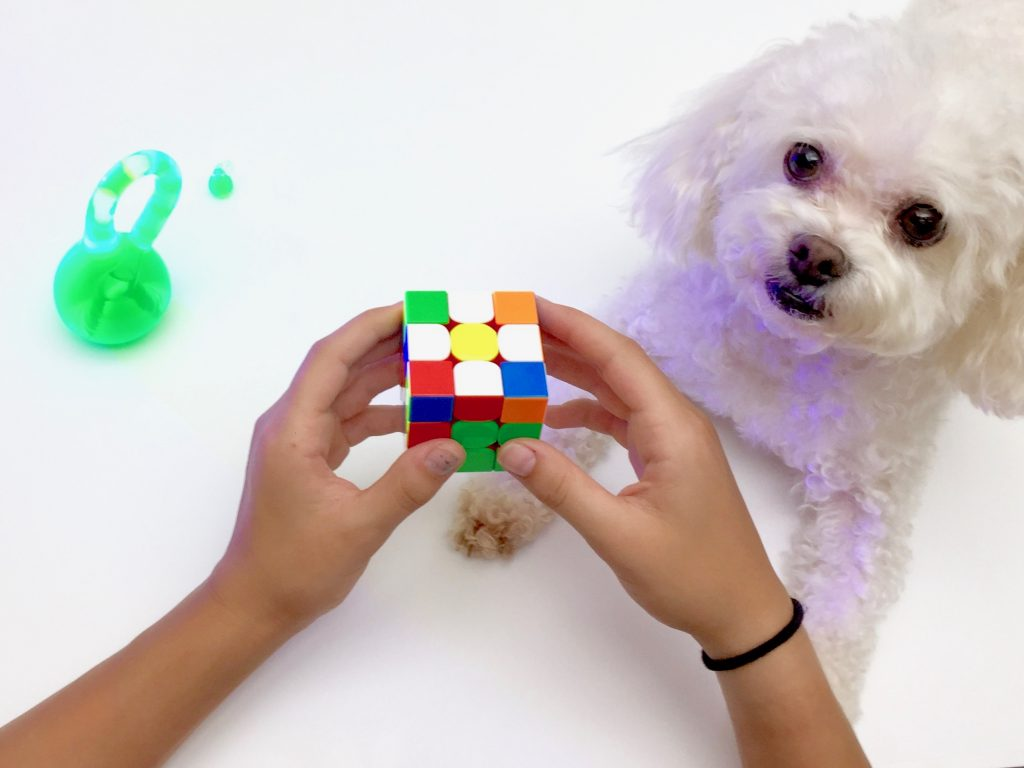 Dog Rubik's Cube Klein Bottle