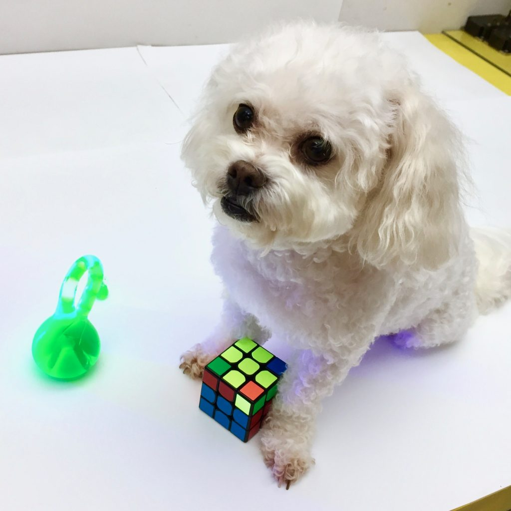 Dog Solves Rubik's Cube